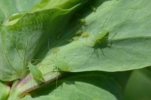fühler bei insekten